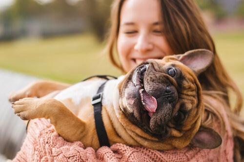 Was tun, wenn der Hund unter trockener Haut leidet?