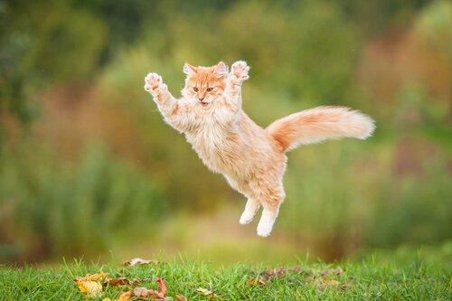 Wie kann man eine Katze glücklich machen?