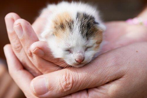 Was tun, wenn du einen Wurf Kätzchen auf der Straße findest?