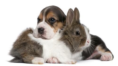 Das Zusammenleben von Hund und Hase