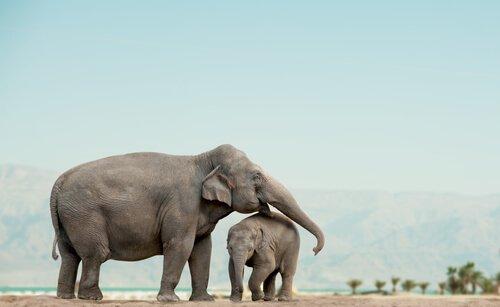 100 afrikanische Elefanten getötet
