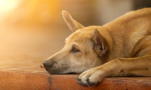 6 Tipps, wie du einen traurigen Hund aufmuntern kannst