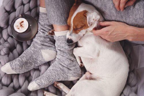 An der Seite eines Hundes schlafen