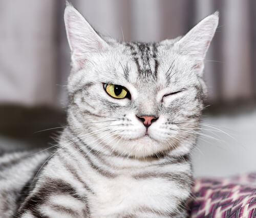 Augenerkrankungen bei Katzen: Vorbeuge und Pflege