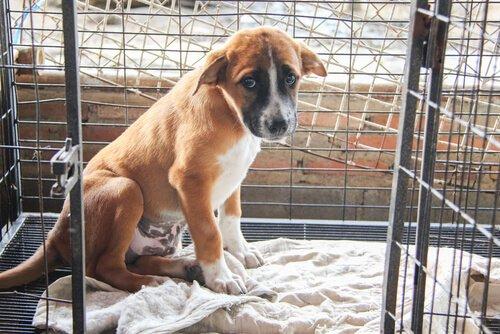 Warum werden immer mehr Haustiere in Spanien ausgesetzt?