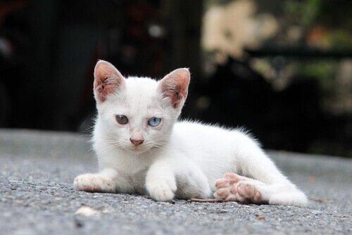 Ausgesetzte Katze