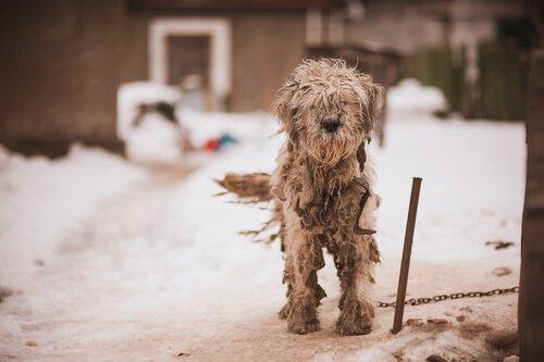 Aussetzung und Vernachlässigung von Hunden