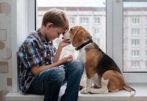 Wissenswertes über den Beagle