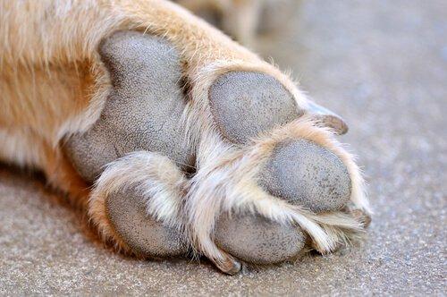 Behandlung von Wunden an Hundeballen