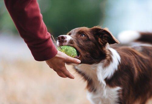 Besitzergreifendes Verhalten mit Spielzeug bei Hunden vermeiden