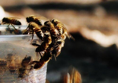 Bienen sind interessant