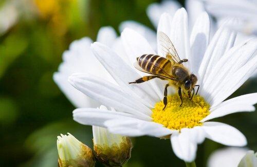 Bienen sind lebenswichtig für uns