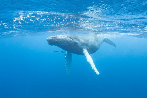 Kennst du den Gesang der Wale?