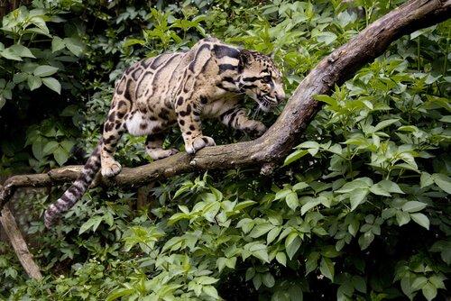 Ein Fleischfresser unter den Tierarten, die auf Bäumen leben.