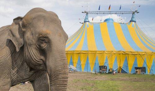 Ein Zirkus ist kein Ort für Elefanten