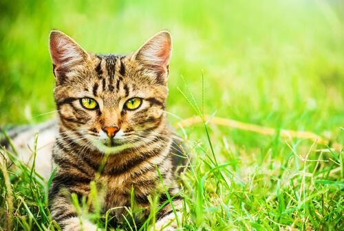 5 Gründe für eine Mischlingskatze aus dem Tierheim