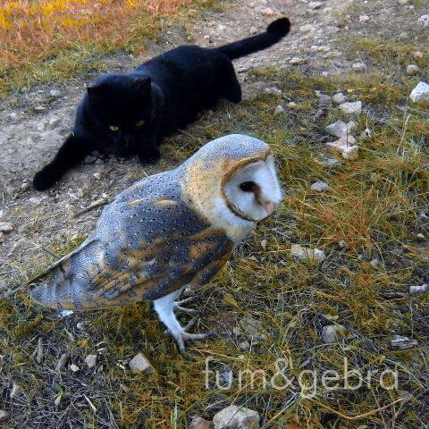 Eule und Katze