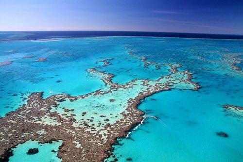 Fauna des Great Barrier Reef: Weltnaturerbe
