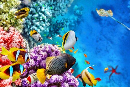 Die Fauna des Great Barrier Reef