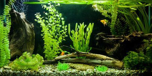 Filtertypen für Aquarien gibt es in unterschiedlichen Ausführungen.