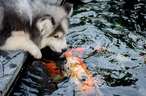 Freundschaften verschiedener Tierarten