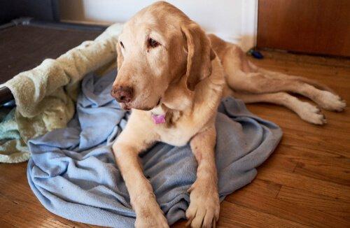 Gedächtnisverlust bei Haustieren