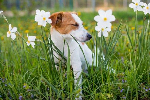 Haarausfall bei Hunden durch Allergien