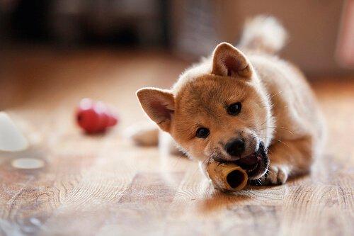 Haarausfall bei Hunden durch schlechte Ernährung