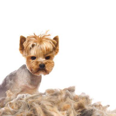 Extremer haarausfall bei hunden