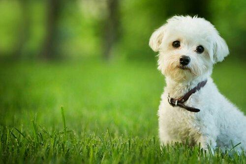 Haben Hunde eine Seele und kommen in den Himmel?