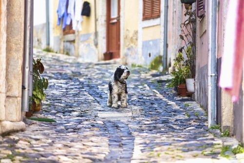 Hund in Lisboa