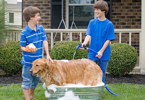 Hund mit dem Schlauch baden: Tipps und Ratschläge