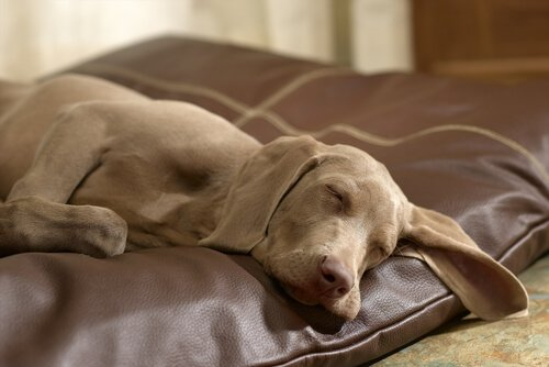 Hund schläft friedlich auf seinem Bett