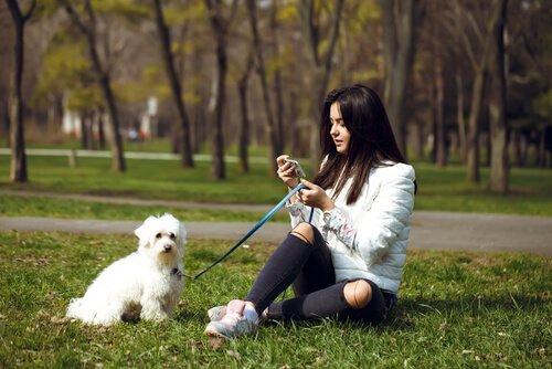 Hundetraining beim Spaziergang mit der Leine