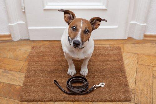 Hundetraining beim Spaziergang