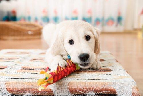Ich teile mein Spielzeug nicht.