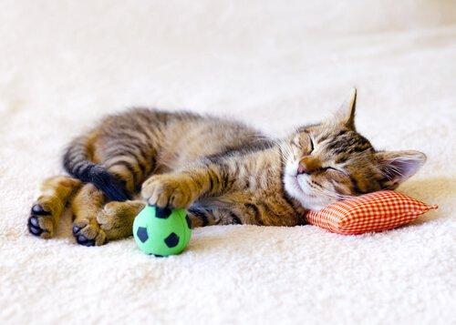 Katze alleine zuhause lassen: mit Spielzeug