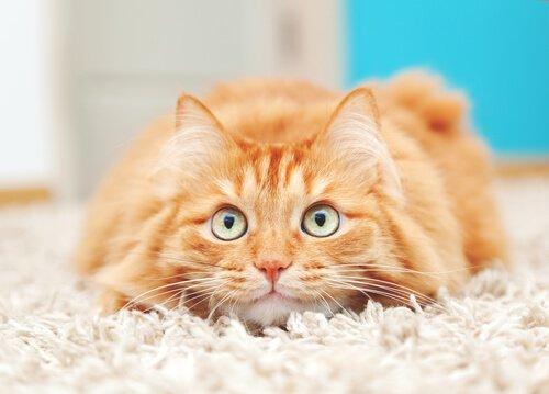 Katze blickt neugierig auf