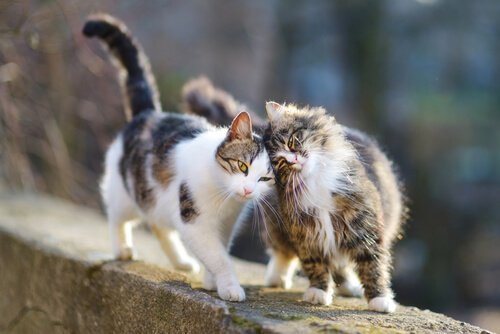 Zwei Katzen leisten sich Gesellschaft