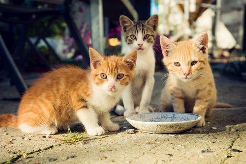 Wissenswertes über die Ernährung einer Katzenkolonie