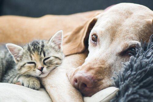 Krankheiten bei alternden Hunden