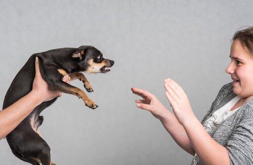 Nicht rennen, wenn ein Hund angreift.