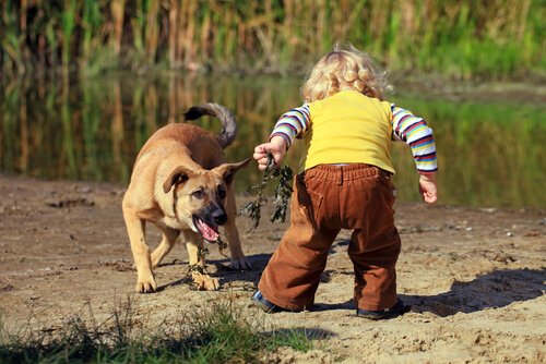 Kinder müssen respektvoll mit den Tieren umgehen