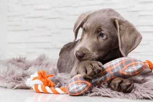 Ressourcenschutz bei Hunden
