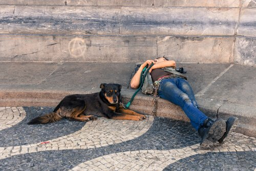 5 herrliche Reiseziele in Europa, die du mit deinem Hund besuchen kannst
