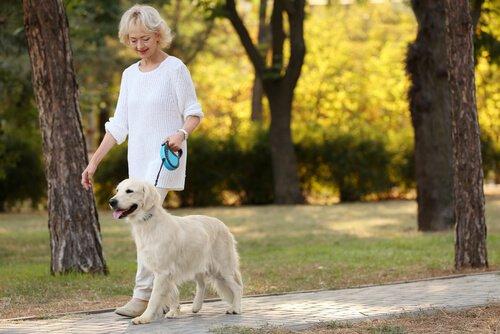 So macht der Spaziergang im Park Spaß