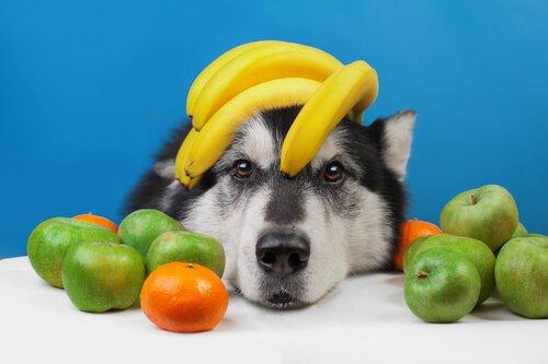 Sommerfrüchte für deinen Hund