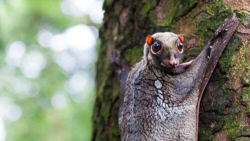 Baumbewohner: 5 Tierarten, die auf Bäumen leben