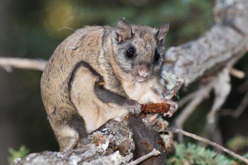 Tierarten, die auf Bäumen leben haben meist längere Krallen.