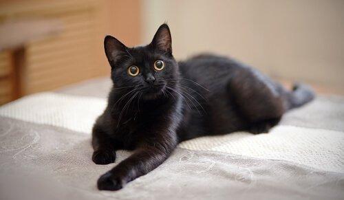 Tipps, um deine Katze alleine zuhause zu lassen